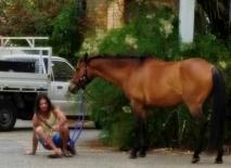horse-bello2-small